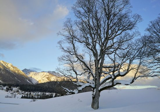 Winter_Home_Slideshow_6