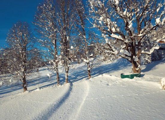 Langlaufloipe_im_Winter